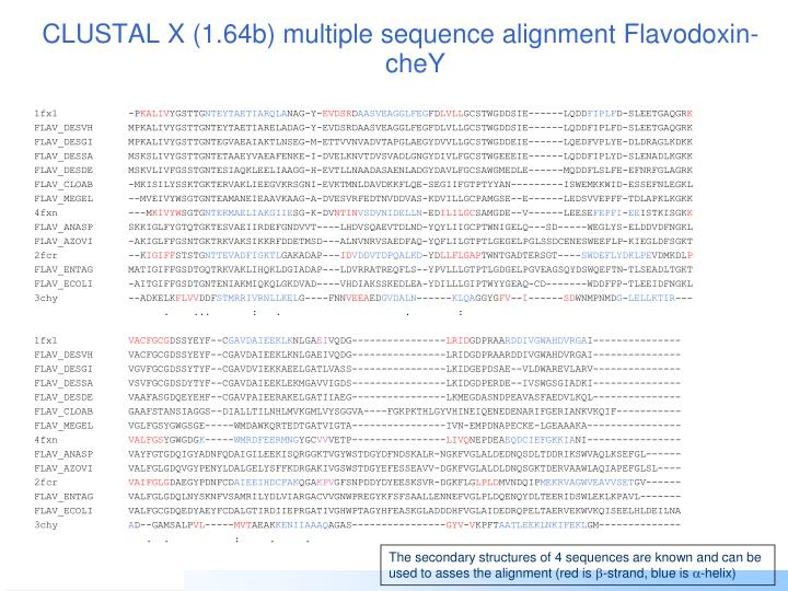 CLUSTAL X (1.64b) multiple sequence alignment Flavodoxin-cheY