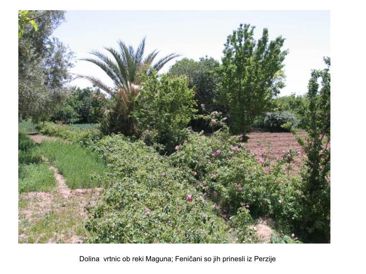 Dolina  vrtnic ob reki Maguna; Feničani so jih prinesli iz Perzije