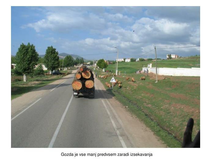 Gozda je vse manj predvsem zaradi izsekavanja