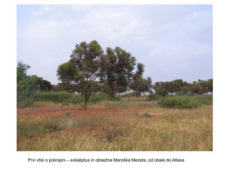 Prvi vtisi o pokrajini – evkaliptus in obsežna Maroška Mezeta, od obale do Atlasa