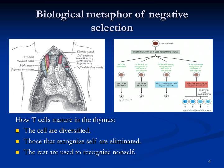 Biological metaphor of negative selection
