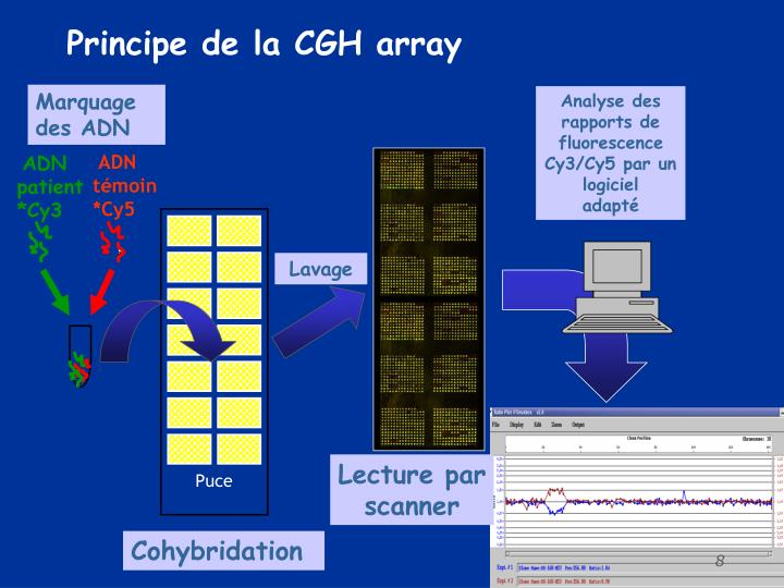 Principe de la CGH array