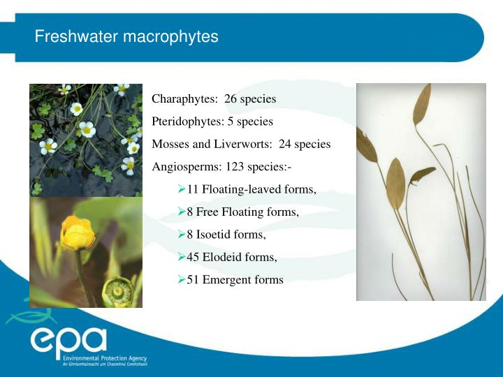 Freshwater macrophytes