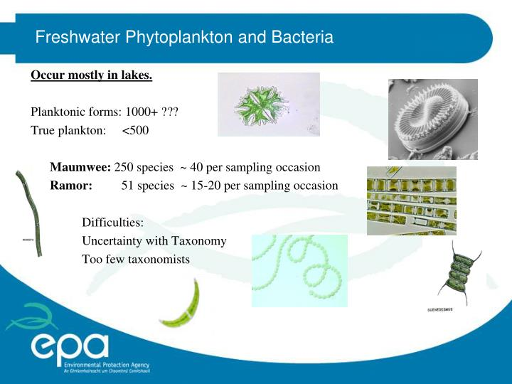 Freshwater Phytoplankton and Bacteria