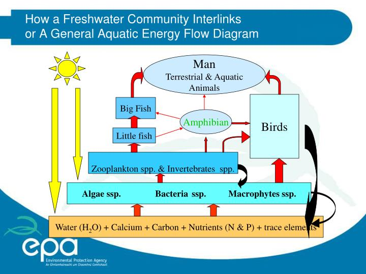 How a Freshwater Community Interlinks