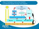 how a freshwater community interlinks or a general aquatic energy flow diagram