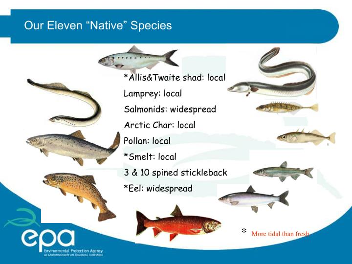 "Our Eleven ""Native"" Species"