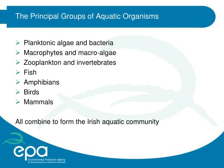 The Principal Groups of Aquatic Organisms