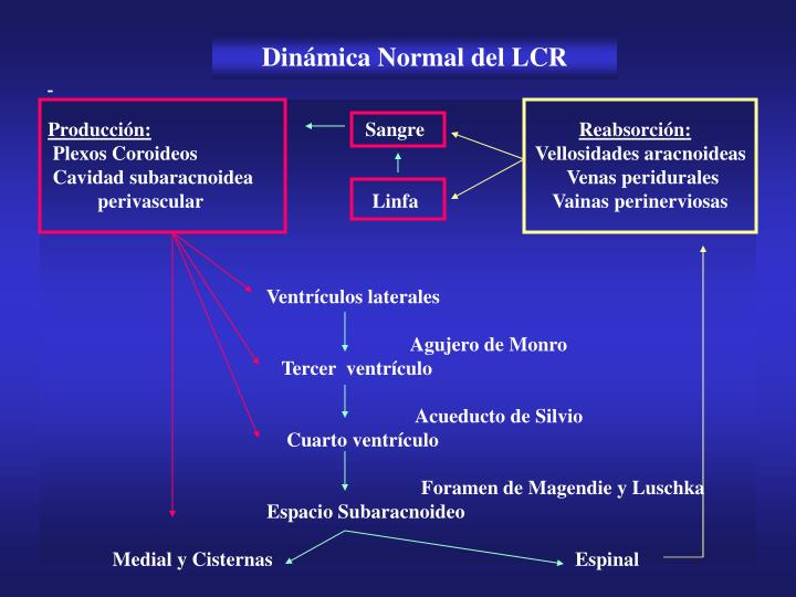Dinámica Normal del LCR