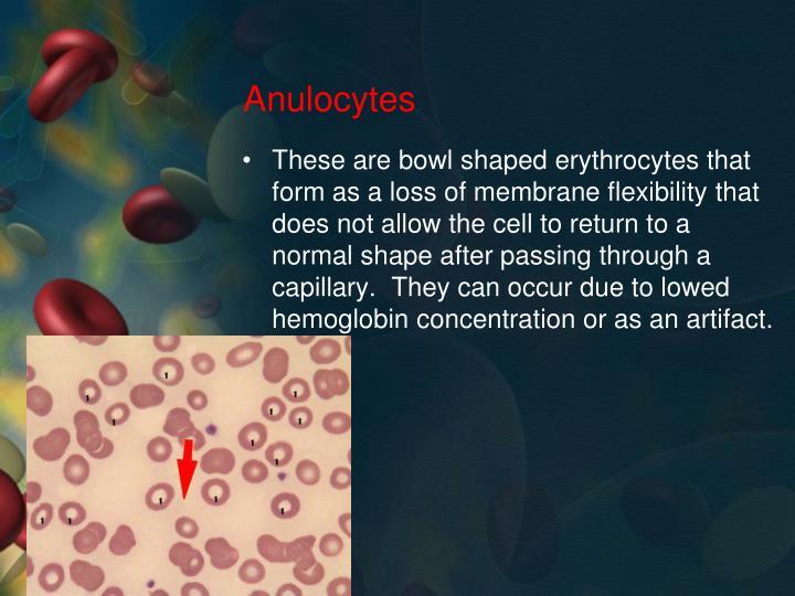Anulocytes