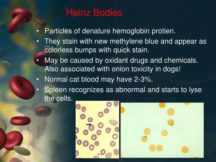 Heinz Bodies