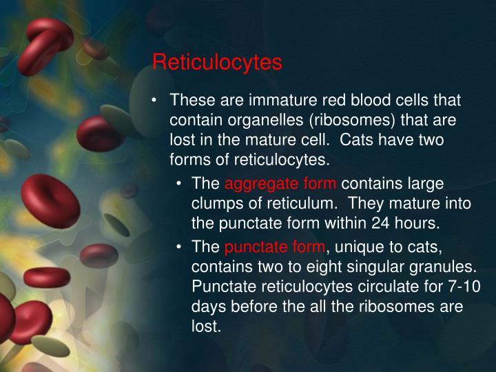 Reticulocytes