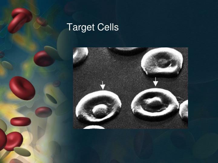 Target Cells