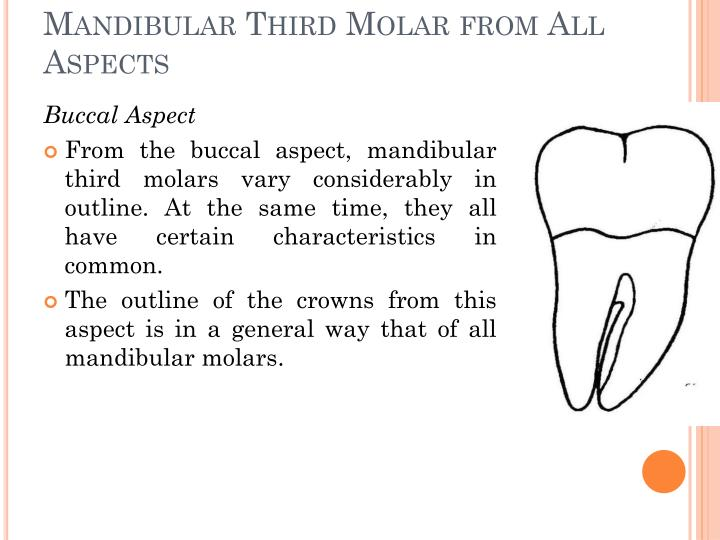 Detailed Description of the Mandibular Third Molar from All Aspects