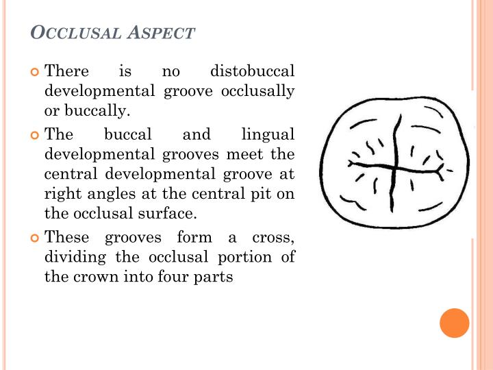 Occlusal Aspect