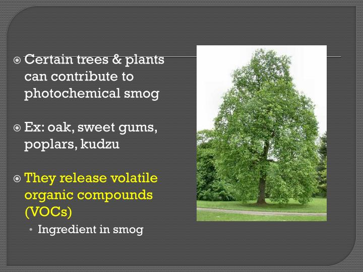 Certain trees & plants can contribute to photochemical smog