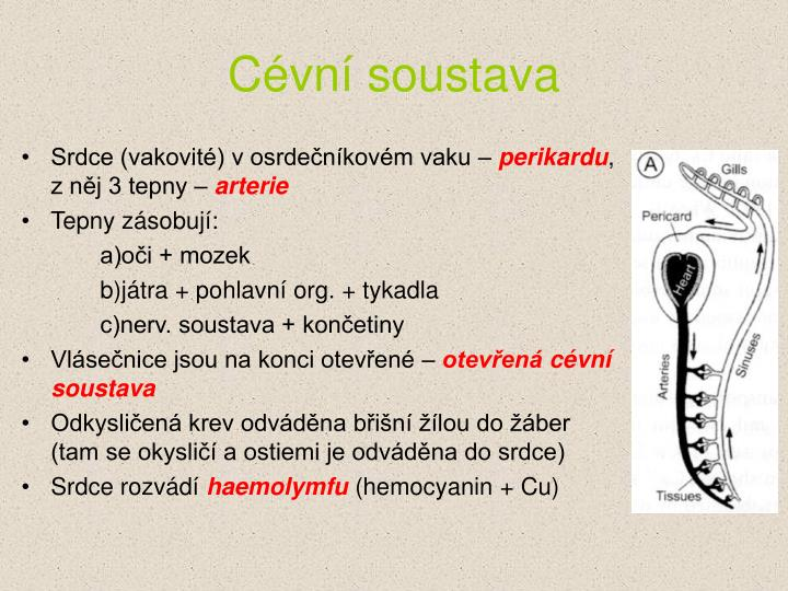 Cévní soustava