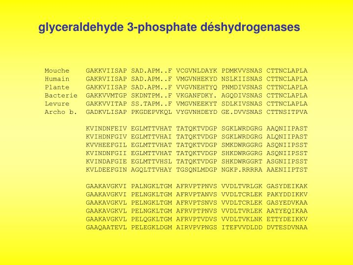 glyceraldehyde 3-phosphate dshydrogenases