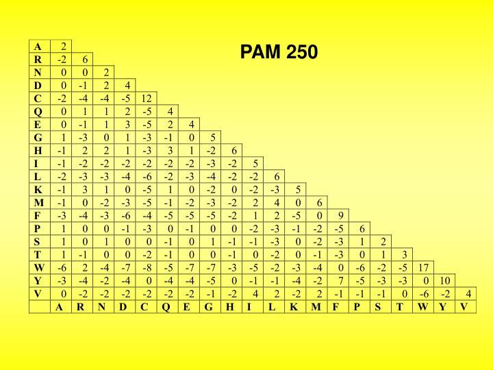 PAM 250