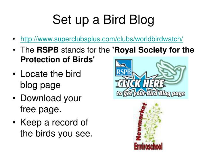 Locate the bird blog page