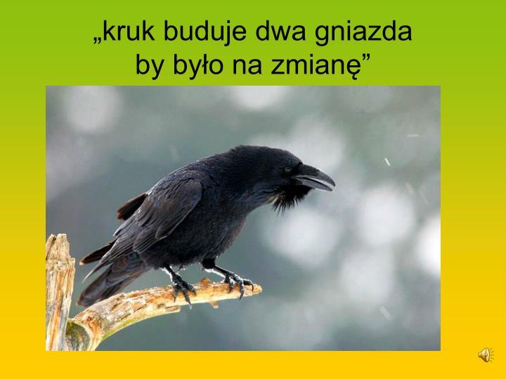 """""""kruk buduje dwa gniazda"""