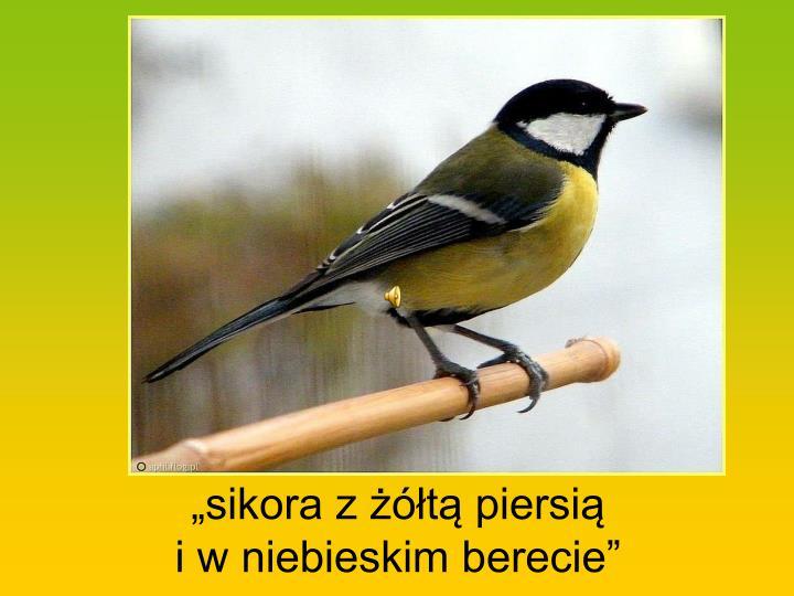 """""""sikora z żółtą piersią"""