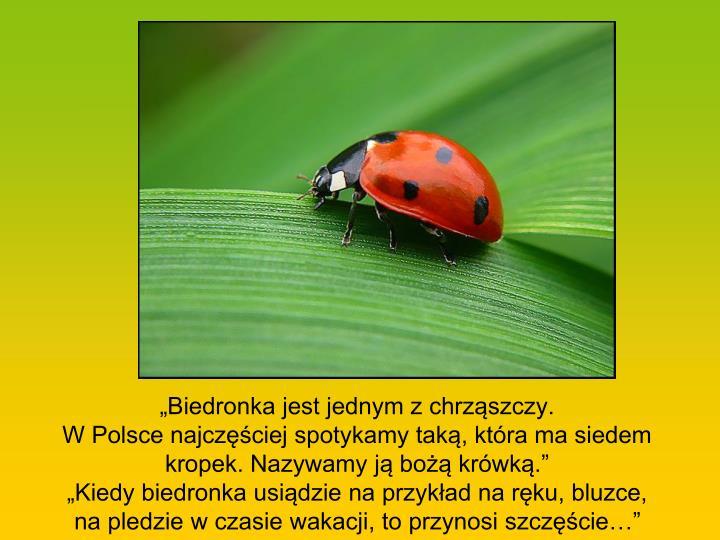 """""""Biedronka jest jednym z chrząszczy."""