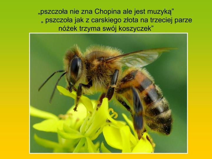 """""""pszczoła nie zna Chopina ale jest muzyką"""""""