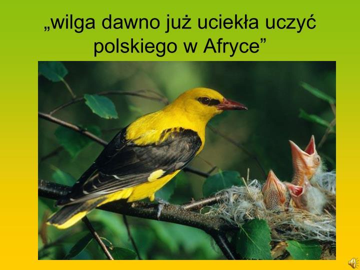 """""""wilga dawno już uciekła uczyć polskiego w Afryce"""""""