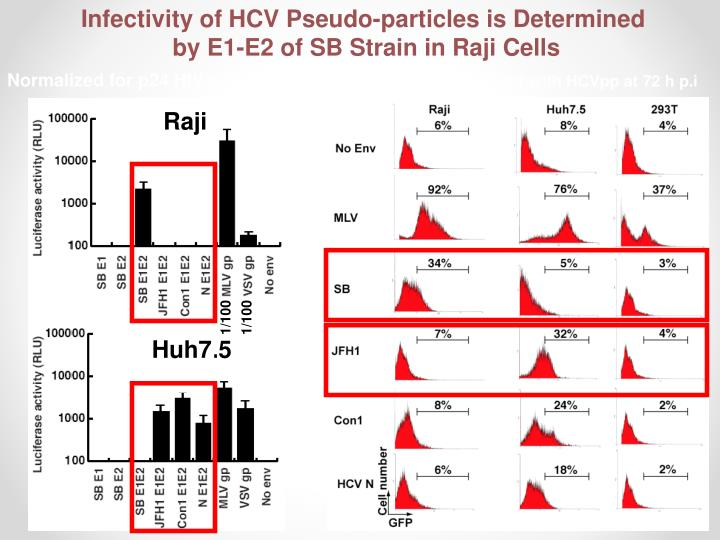 Infectivity of HCV Pseudo-particles is Determined