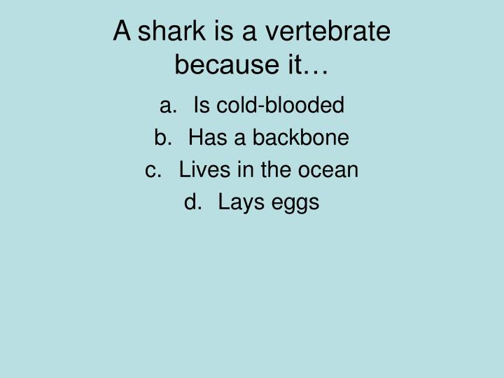 A shark is a vertebrate