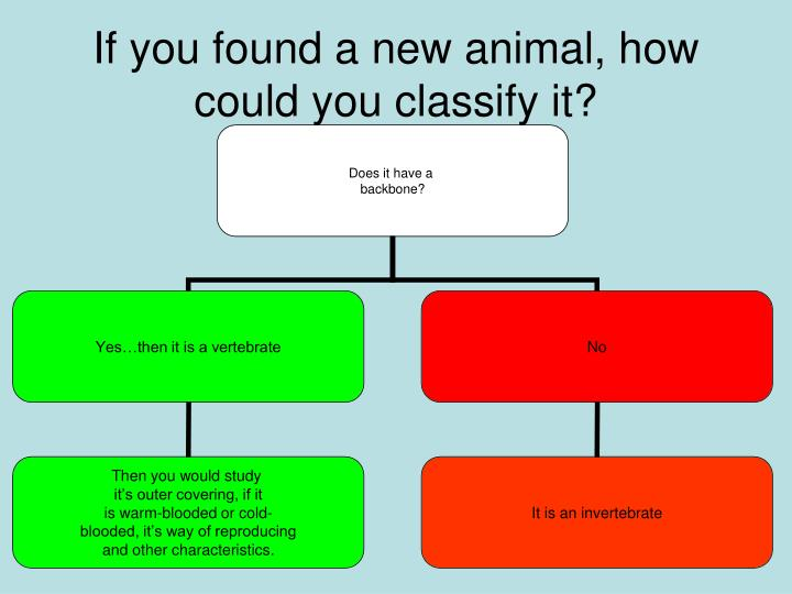 If you found a new animal, how could you classify it?