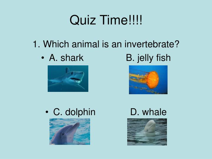 Quiz Time!!!!
