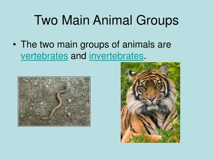 Two Main Animal Groups