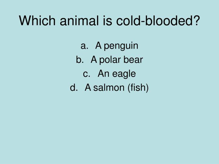 Which animal is cold-blooded?