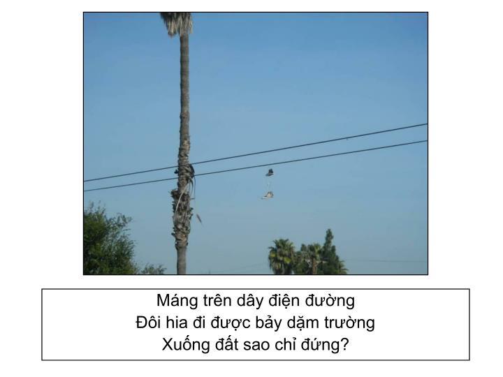 Máng trên dây điện đường