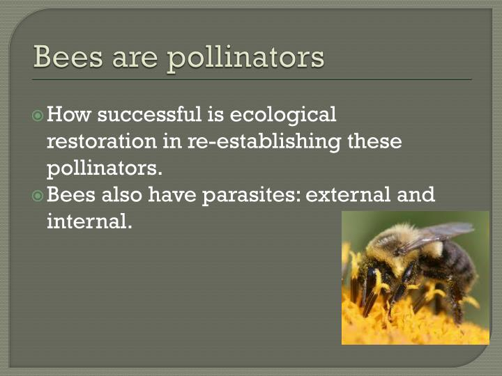 Bees are pollinators