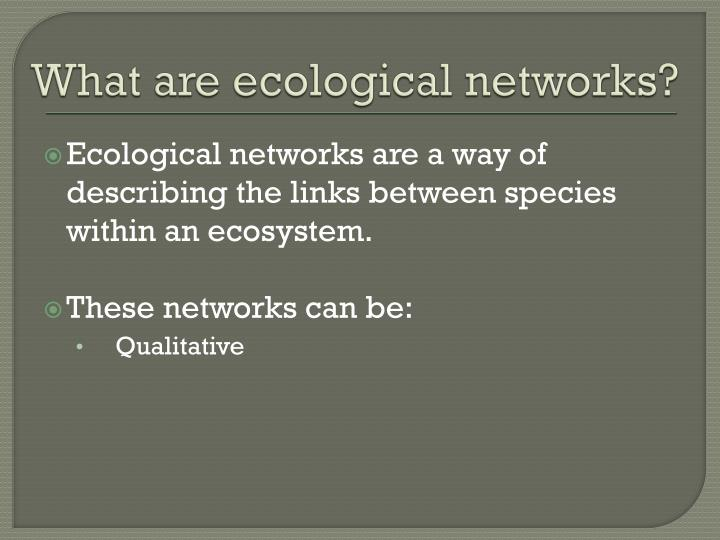 What are ecological networks?