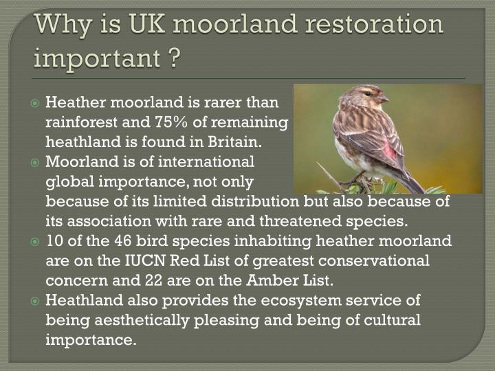 Why is UK moorland restoration important ?