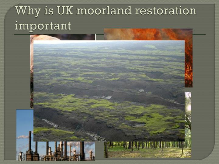 Why is UK moorland restoration important
