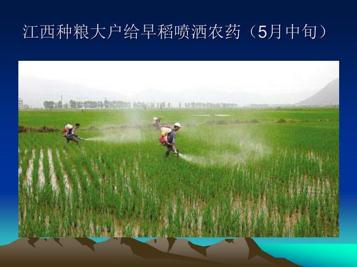 江西种粮大户给早稻喷洒农药(
