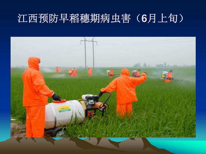江西预防早稻穗期病虫害(
