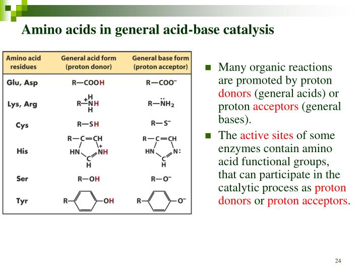 amino acids review An amino acid is considered essential because the body cannot make it from other dietary components therefore if one's diet does not contain a full complement of the essential amino acids, a nutritional deficiency exists.