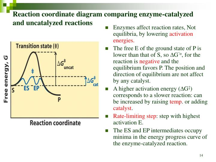 enzymes diagram reaction coordinate