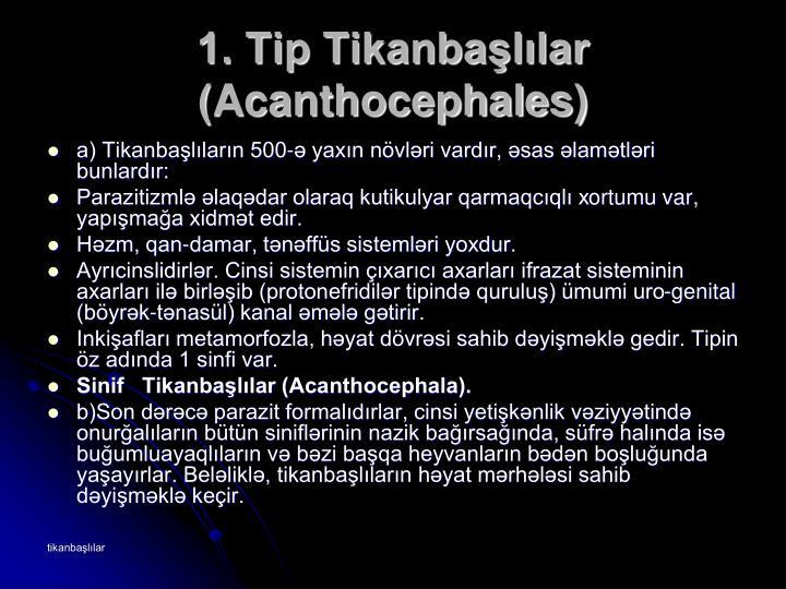 1. Tip Tikanbaşlılar (Acanthocephales)