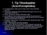 1 tip tikanba l lar acanthocephales