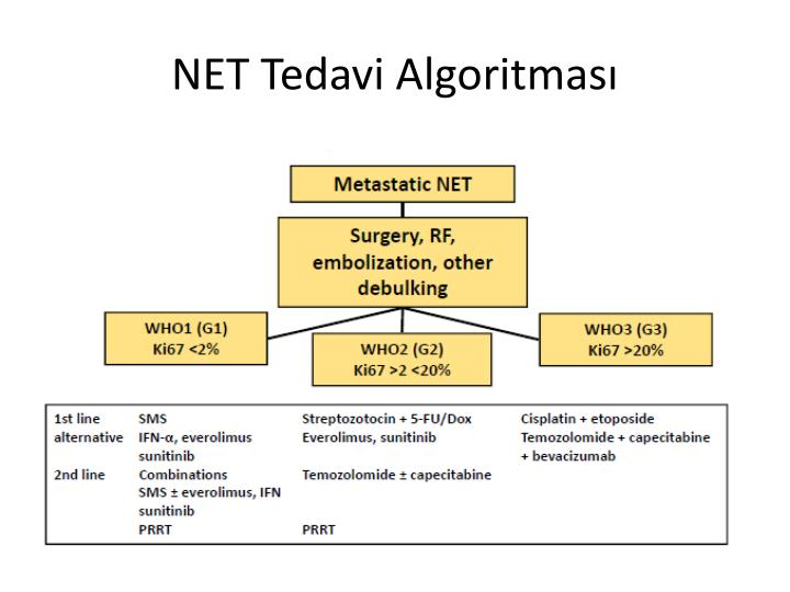 NET Tedavi Algoritmas