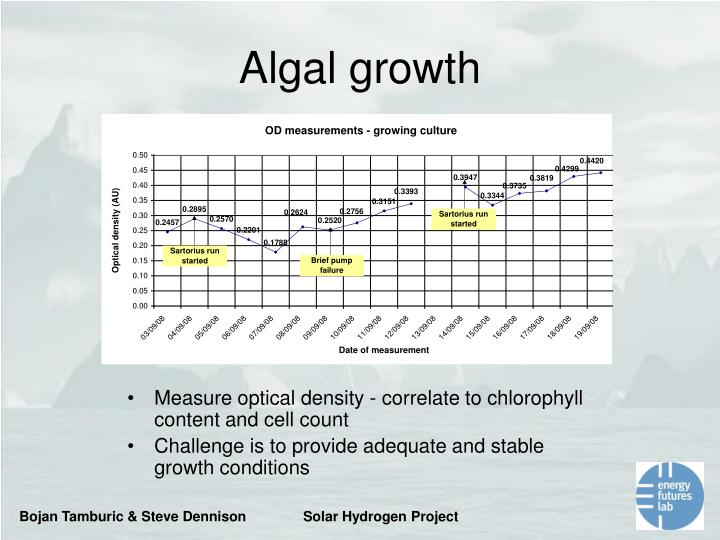 Algal growth