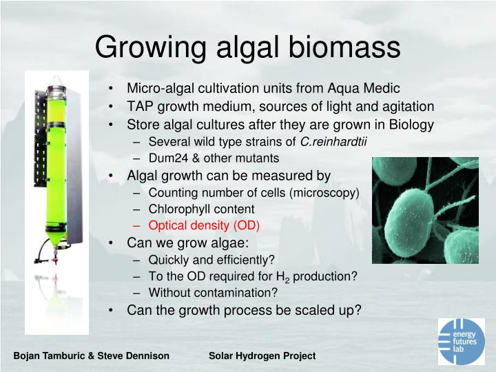 Micro-algal cultivation units from Aqua Medic