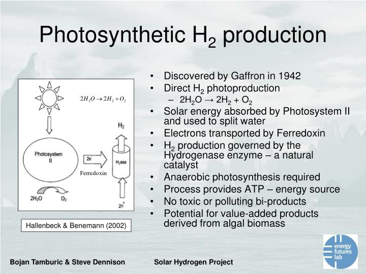 Photosynthetic H